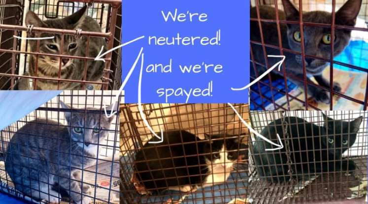 we're neutered with arrows and 5 cats
